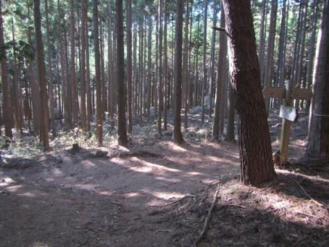 林間コース分岐