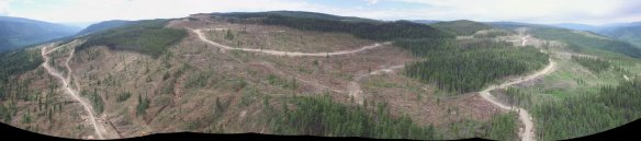 Recent clearcuts near Wells Gray.
