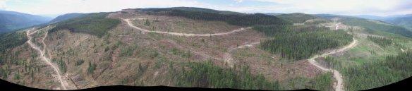Recent clearcuts near Wells Gray.