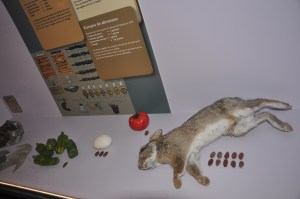 Rabbit anyone? It will cost you 10 cacao beans. Aztecs used cacao beans as cash. It was that valuable!