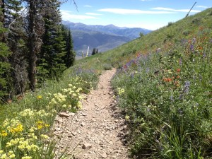 This is what you'll see hiking down from the ski lift. It's an easy hike on the knees and on the eyes.