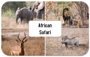 safari_original-300x190