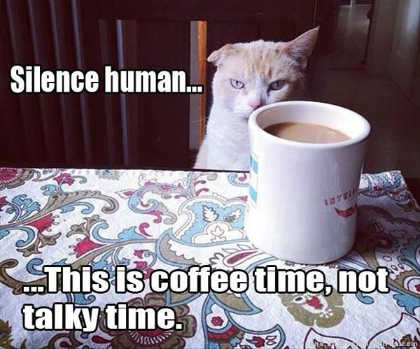 funny-cat-pictures-coffee-time