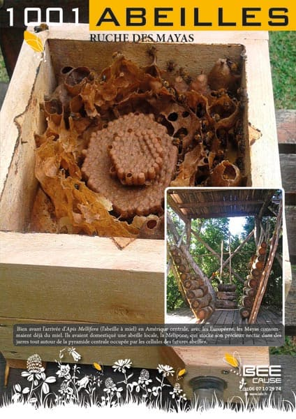 Cadre ruche Mayas