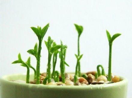 plantando-limao8.jpg