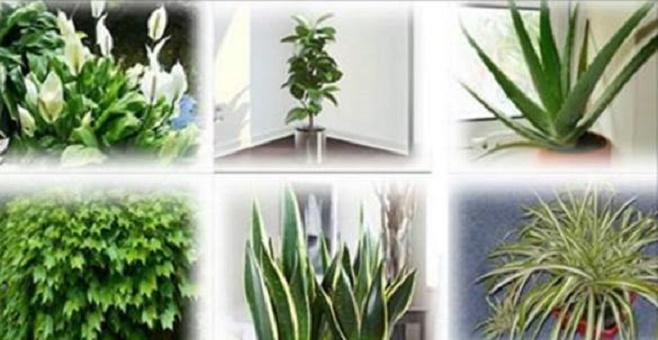 plantas_que_purificam_o_ar