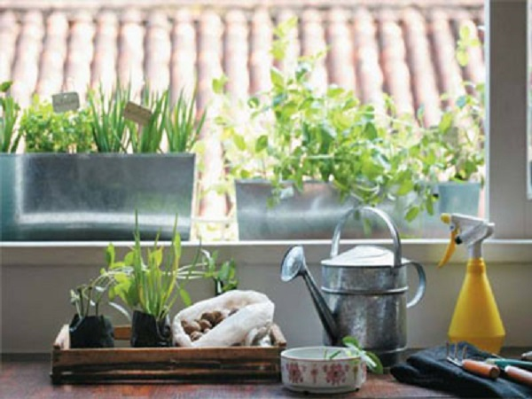 horta-na-cozinha