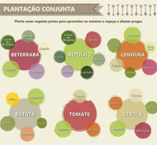 vegetais_em_casa3