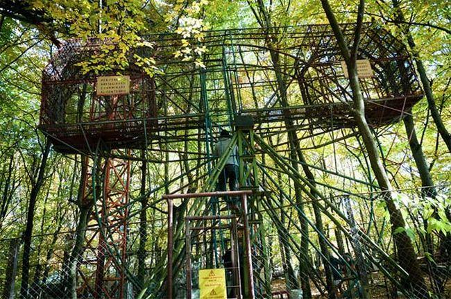 construção na floresta (1)