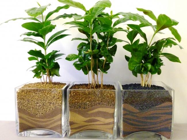 planta2