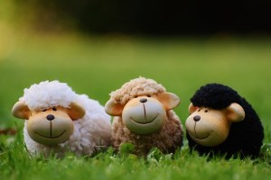moutons-en-peluche