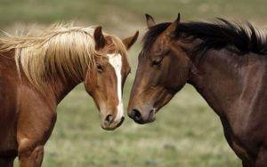 paarden namen