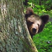 Erlebnisparadies Gorski Kotar – das Naturwunder an der kroatischen Adria