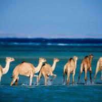 Zusammenarbeit des Wadi el Gemal Nationalparks mit den Ababda