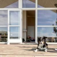 Neues Magazin für Urlaub mit Hund & Co.