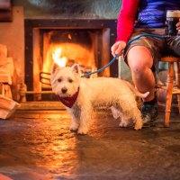 Ab jetzt auch mit Hund ins irische Pub