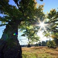 Auf den Spuren der wohltuenden Wirkung des Waldes im Bayerischen Wald