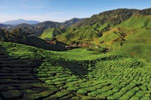 Malaysia Teeplantage Cameron Highlands