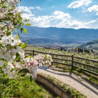 Frühe Blütenträume in Algund