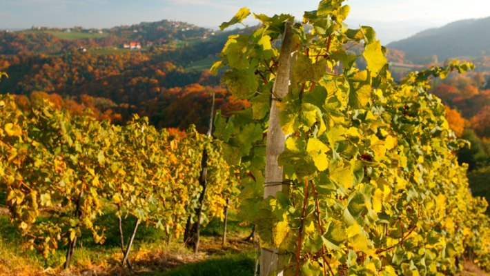 Goldener Herbst in der Südsteiermark