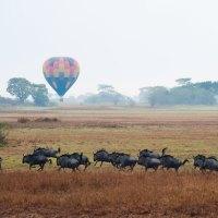 """Die fünf schönsten """"Game Flights"""" im südlichen Afrika"""