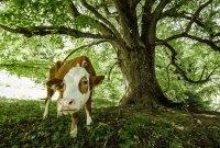 Das Kufsteinerland und seine über 40 Natur-, Kraft- & Bewusstseinsplätze