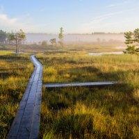 Herbstliche Naturerlebnisse in Estland