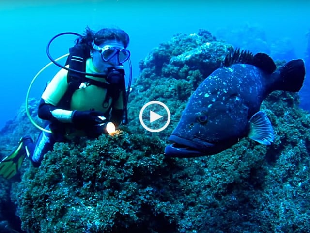 Mergulhe na beleza dos Açores