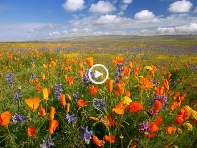 Que belas paisagens do Baixo Alentejo!