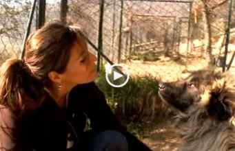 A Raça de Cães Serra da Estrela