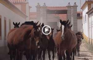 Escola Portuguesa de Arte Equestre!