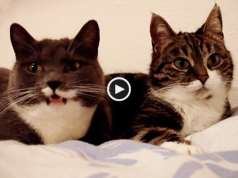 Conversa entre gatos