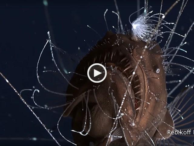 Filmada em Portugal criatura nunca antes vista