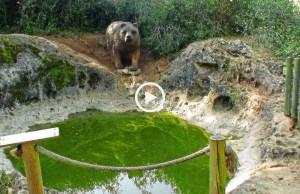 A Pia do Urso, um lugar mágico