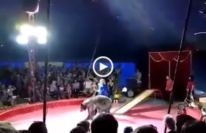 Urso revoltado ataca mulher próximo de estádio do Mundial 2018