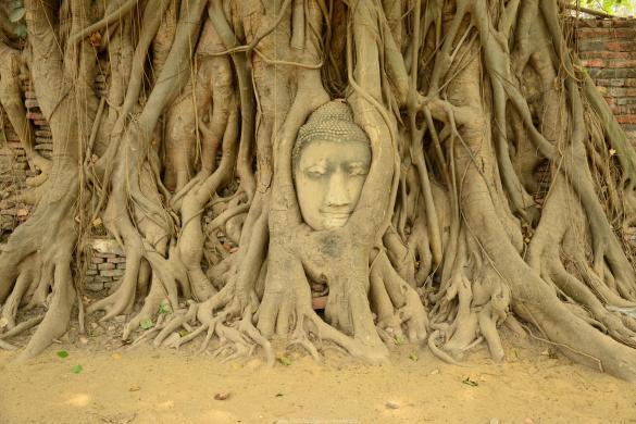Ayutthaya - jednodenní výlet z Bangkoku. Bývalé sídlo Siamského království leží nedaleko od Bangkoku a tady je pár tipů na to, jak mít z výletu co nejvíce