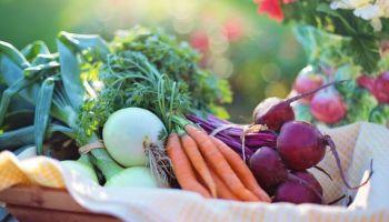 produtos-agricultura-verduras-família