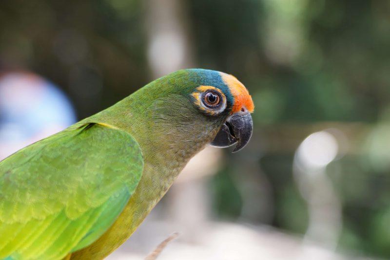 parque-das-aves-reabre-para-visitacao-1-setembro