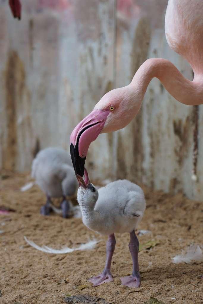 flamingos-parque-das-aves-foz