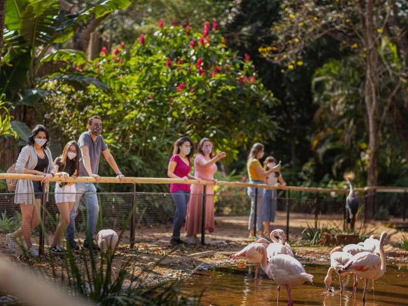 visitantes-observando-flamingos-Lago-Flamingos-parque-das-aves