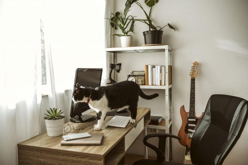 Home Office com gato