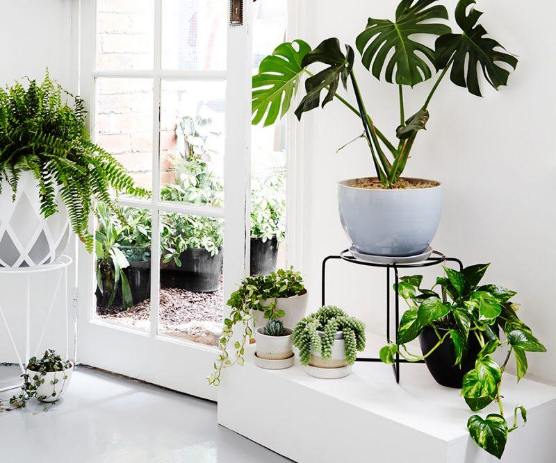 plantas meia sombra