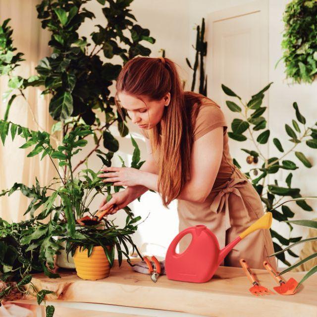 Plantas para dentro de casa: Veja as que mais se adaptam