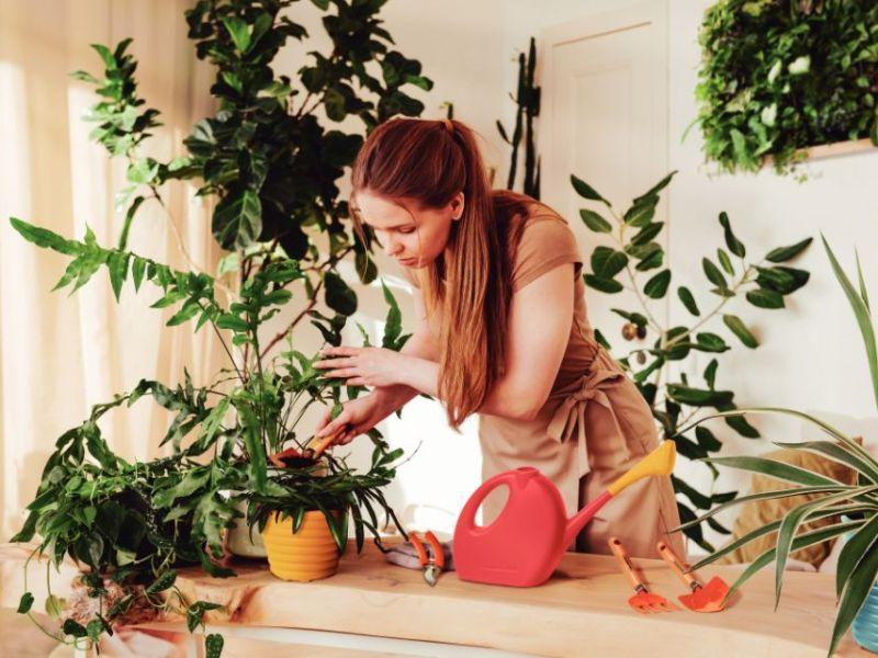 Mulher regando plantas internas