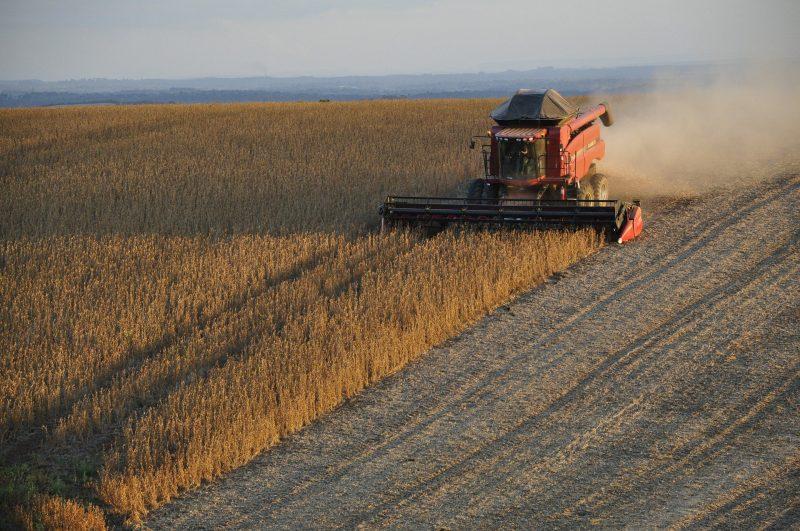 Safras de soja e arroz no Paraguai