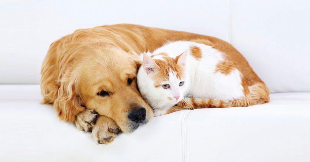 animais-diabetes-cachorro-gato