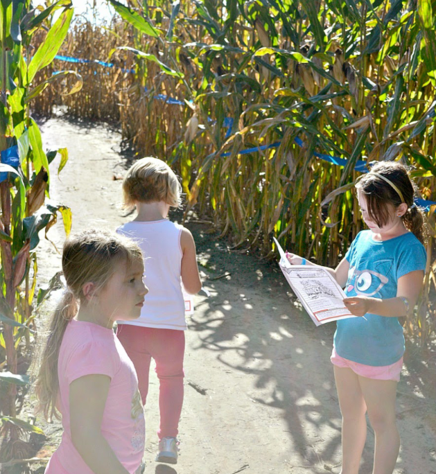 Fun Fall activity - take the kids to a corn maze!