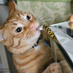 How to stop your cat from chewing cords
