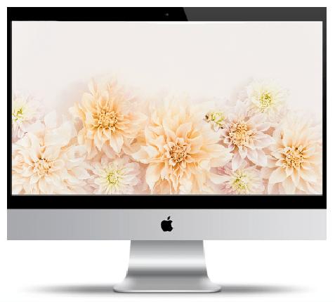 Desktop wallpaper, Spring desktop wallpaper, mobile wallpaper, Spring mobile wallpaper, Free desktop wallpaper, flower desktop wallpaper