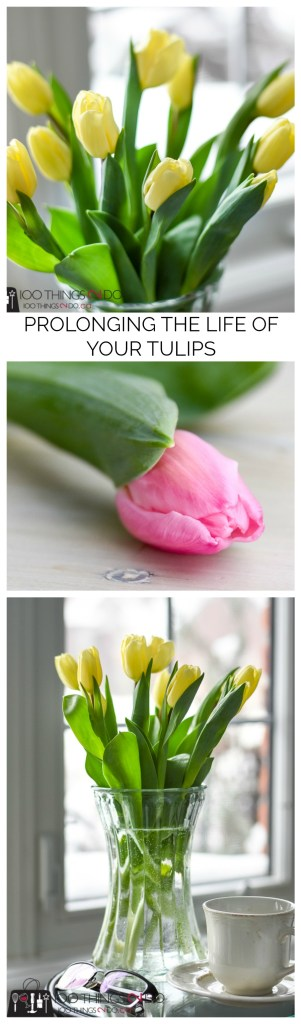 Tulip care, extending the life of your tulips, how to care for cut tulips, prolonging the life of tulips, caring for tulips